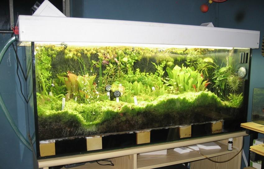 anleitung zum aufbau eines terrariums mit beregnungsanlage und geschlossenem wasserkr. Black Bedroom Furniture Sets. Home Design Ideas